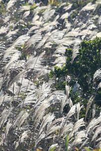 飛鵝山 綠洲oasistrek